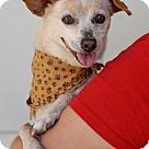 Adopt A Pet :: Dionne