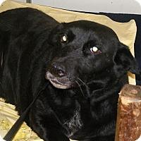Adopt A Pet :: Smiley - Floresville, TX