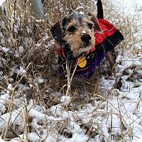 Adopt A Pet :: Sophie - McLoud, OK