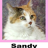 Adopt A Pet :: Sandy - Wichita Falls, TX