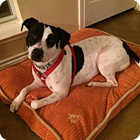 Adopt A Pet :: Sprite - Guest - Dallas, TX