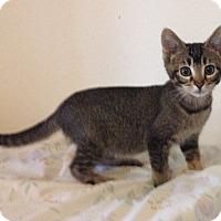Adopt A Pet :: Petunia - Santa Rosa, CA