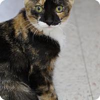 Adopt A Pet :: June - Philadelphia, PA