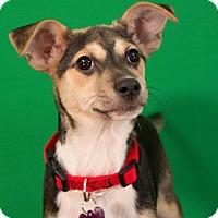 Adopt A Pet :: Thelma - Berkeley Heights, NJ