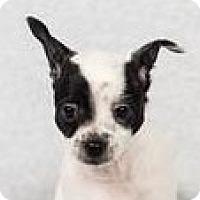 Adopt A Pet :: Ziggy - Minneapolis, MN