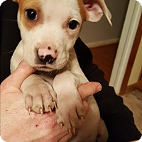 Adopt A Pet :: Albert - Kendall, NY