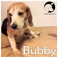 Adopt A Pet :: Bubby - Pittsburgh, PA