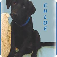 Adopt A Pet :: Chloe - Marlborough, MA