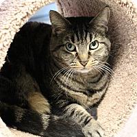 Adopt A Pet :: Dolores - Sarasota, FL