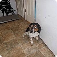 Adopt A Pet :: Bounty - Lewisburg, TN