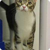 Adopt A Pet :: Jasper - DFW Metroplex, TX