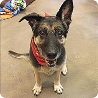 Adopt A Pet :: Roxy - Maple Ridge, BC