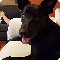 Adopt A Pet :: Cosmo - Philadelphia, PA