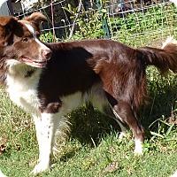 Adopt A Pet :: Kirby - Newburgh, NY