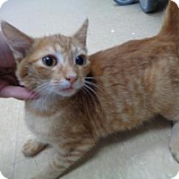 Adopt A Pet :: Ollie - St Augustine, FL