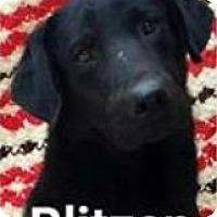Adopt A Pet :: Blitzen - Island Lake, IL