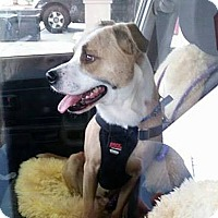 Adopt A Pet :: Buster - Jacksonville, FL