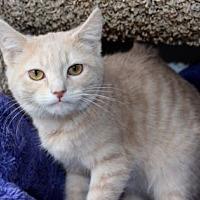 Adopt A Pet :: Camden - Louisville, KY