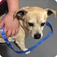 Adopt A Pet :: 17-02-0545 Sampson - Dallas, GA