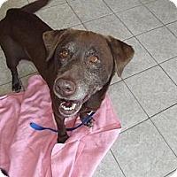 Adopt A Pet :: Bella - Wahoo, NE