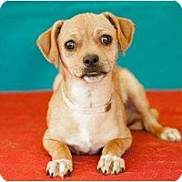 Adopt A Pet :: Bailey - Los Angeles, CA