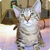 Adopt A Pet :: Mars - Odenton, MD