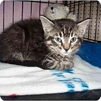 Adopt A Pet :: Snickers - Frenchtown, NJ