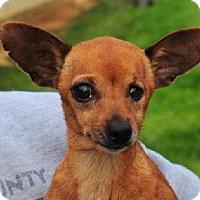 Adopt A Pet :: Penny - Crandall, GA