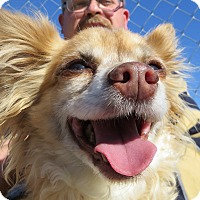 Adopt A Pet :: Baby - Meridian, ID
