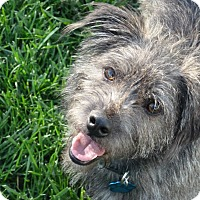 Adopt A Pet :: Smokey-pending adoption - Omaha, NE