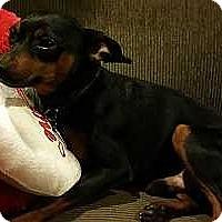 Adopt A Pet :: Roscoe - Sacramento, CA