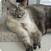 Adopt A Pet :: Truffle - Apex, NC