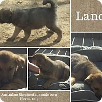 Adopt A Pet :: Lance meet me 2/5 - Manchester, CT