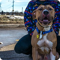 Adopt A Pet :: Berkley - Cleveland, OH