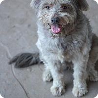 Adopt A Pet :: Fiona - Woonsocket, RI