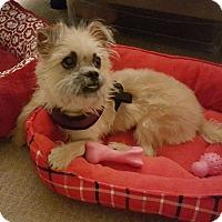 Adopt A Pet :: Sophie - Windermere, FL