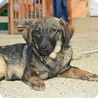 Adopt A Pet :: Nica (Courtesy Listing) - Woonsocket, RI