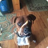 Adopt A Pet :: Jiggs - Reno, NV