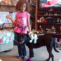 Adopt A Pet :: GYPSY - Decatur, AL