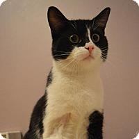 Adopt A Pet :: Adagio - Verdun, QC