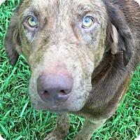 Adopt A Pet :: Matthew - St Petersburg, FL