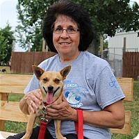 Adopt A Pet :: Rocky 2 - Elyria, OH