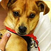 Adopt A Pet :: Starfox - Ogden, UT