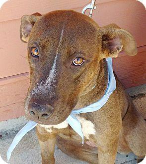 Terrier (Unknown Type, Medium) Mix Dog for adoption in Huntsville, Alabama - Mandy