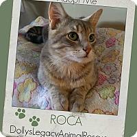 Adopt A Pet :: ROCA - Lincoln, NE