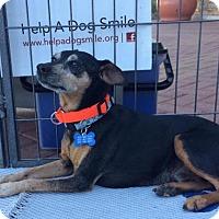 Adopt A Pet :: Enzo - Phoenix, AZ