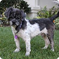 Adopt A Pet :: BO - Newport Beach, CA