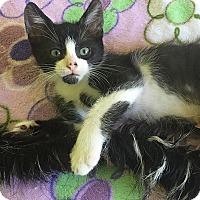 Adopt A Pet :: Ping - Tampa, FL