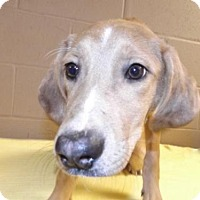 Adopt A Pet :: Chicklet - Oxford, MS
