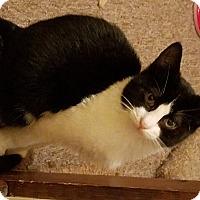 Adopt A Pet :: Inky - Berkeley Hts, NJ